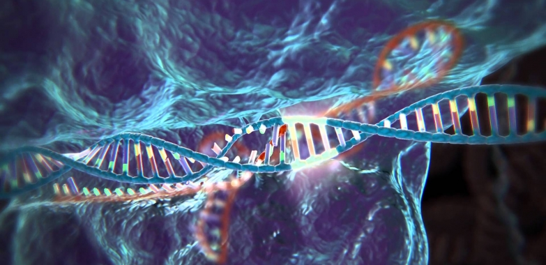 Everything You Need To Know About CRISPR/Cas9