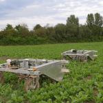 AI-powered weeding robots